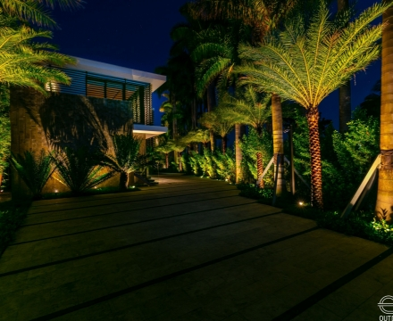 Palm Island 5